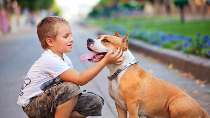 Домашний питомец для ребенка - настоящая радость. Выгуливать собаку, гладить кота, говорить с попугаем - все это приносит нереальное удовольствие. Главное правильно выбрать животное